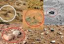 Странные и необычные фото Марса. Странные объекты, предметы, животные, существа